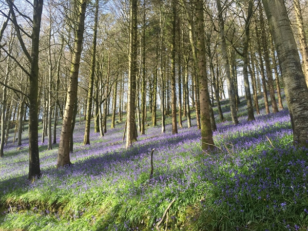In and out of the dusty bluebells